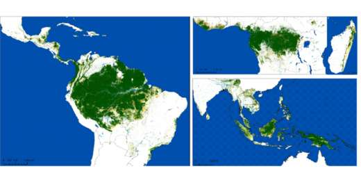 Les cartes des forêts tropicales humides restantes en janvier 2020. © Science Advances, Vancutsem et al. 2021