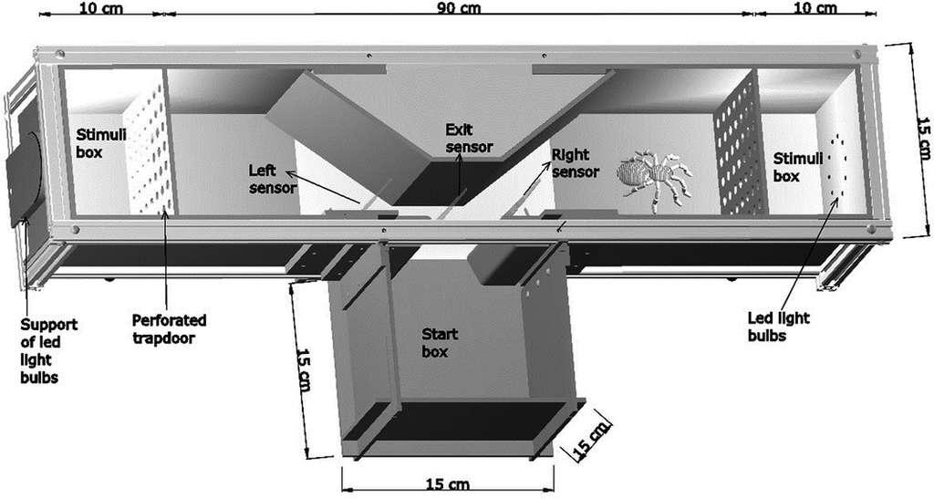 Le labyrinthe de l'expérience. La mygale est introduite dans la première boîte (Start box) et doit choisir entre le couloir de gauche et celui de droite et son mouvement est repéré par des capteurs (sensor). De part et d'autre du T, une chambre de stimulation (Stimuli box) communique lumière ou odeur par une cloison perforée (Perforated trapdoor). La lumière vient de LED et les odeurs d'une proie (une blatte) ou d'une femelle (la mygale au travail est un mâle). © Fanny Ruhland et al., Journal of Zoology