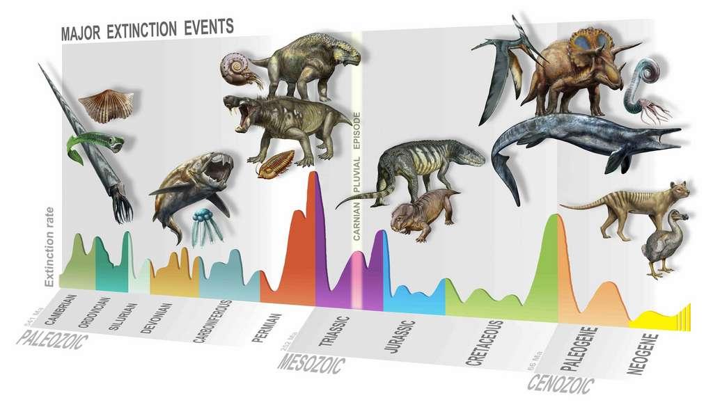 Les cinq extinctions de masse les plus importantes connues dans l'histoire de la Terre : celle de l'Ordovicien, du Dévonien, du Permien, du Trias, du Crétacé. © D. Bonadonna, Muse, Trento