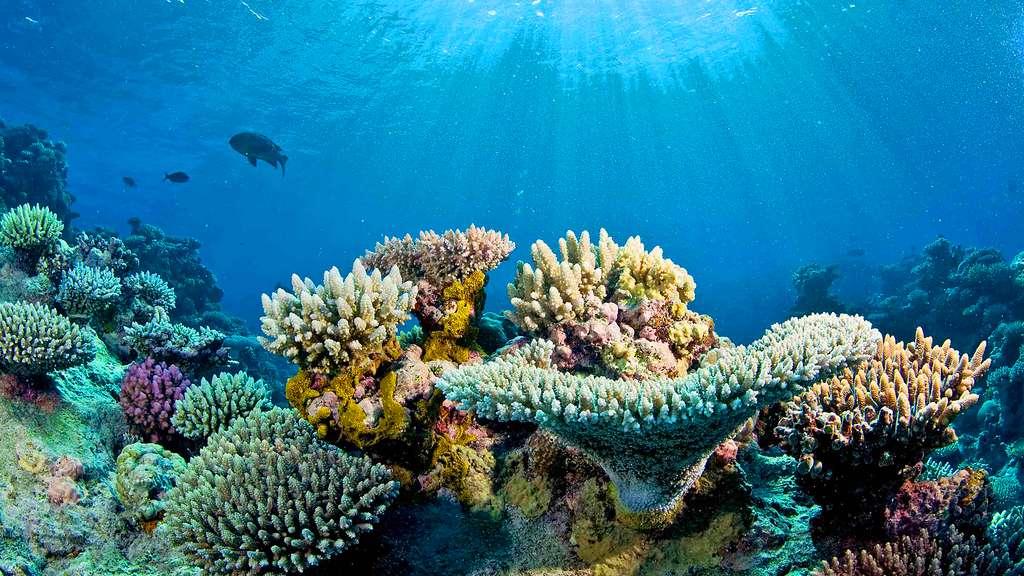 Le récif d'Osprey et ses somptueux coraux