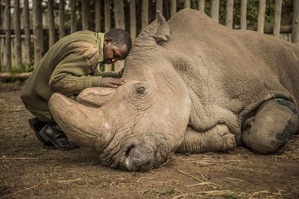 Joseph Wachira disant au revoir à Soudan le dernier rhinocéros blanc du Nord. Ce qui était si déchirant, c'est que vous reconnaissez, lorsque vous regardez l'image, que les êtres humains sont à la fois les protecteurs et les destructeurs. © Ami Vitale, tous droits réservés.