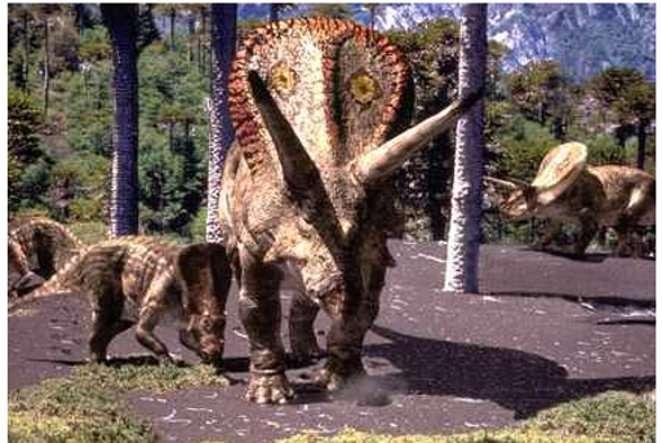 Le crâne de ce Torosaurus, preuve d'une sénescence des dinosaures ? © BBC