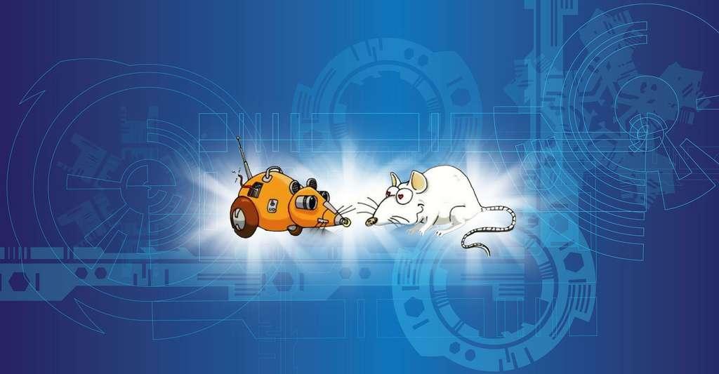 Psikharpax : reproduire au mieux le fonctionnement du rat. © Girard Benoît