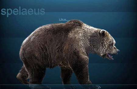 Ours des cavernes actuels © Sergio dlarosa GNU Free Documentation License, Version 1.2