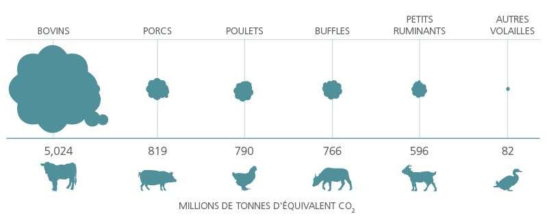 En matière d'émission de gaz à effet de serre, les plus gros contributeurs sont la viande bovine et le lait qui comptent respectivement pour plus de 40 % et pour presque 20 % des émissions du secteur. © FAO