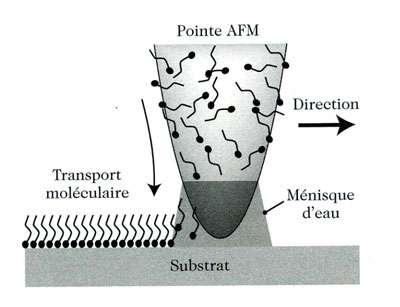 Fig 2 : dépôt de molécules de thiols sur un substrat par transfert depuis la pointe d'un AFM.