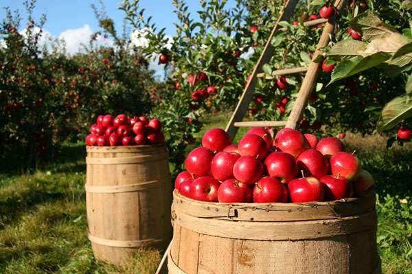 Préparer son verger pour avoir de beaux fruits. © Lumix2004, Pixabay, DP