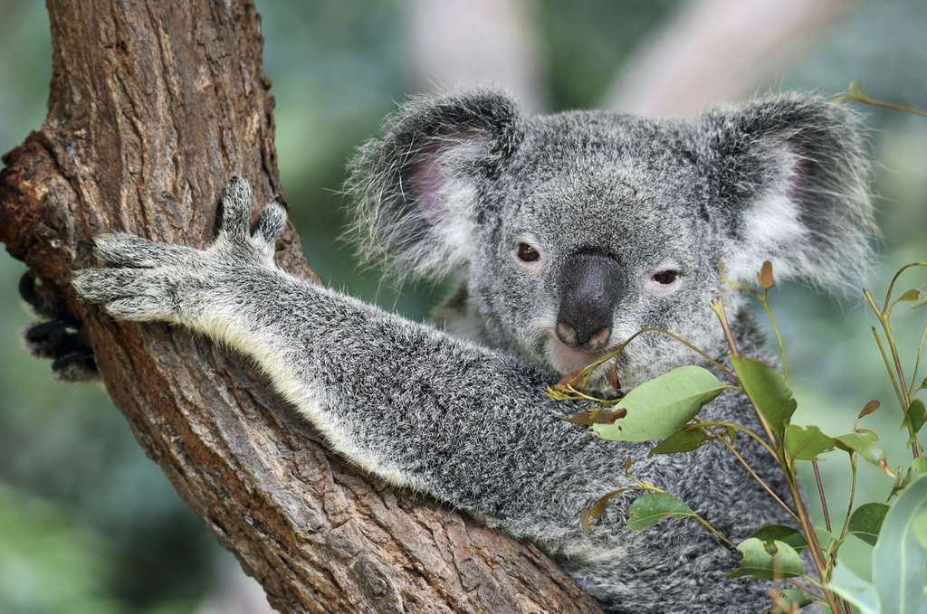 L'appendice est une structure anatomique que l'on retrouve chez de nombreuses espèces pourtant très différentes, de l'Orang-outan au koala, en passant par le castor et bien sûr, l'humain. © David Clode, Unsplash