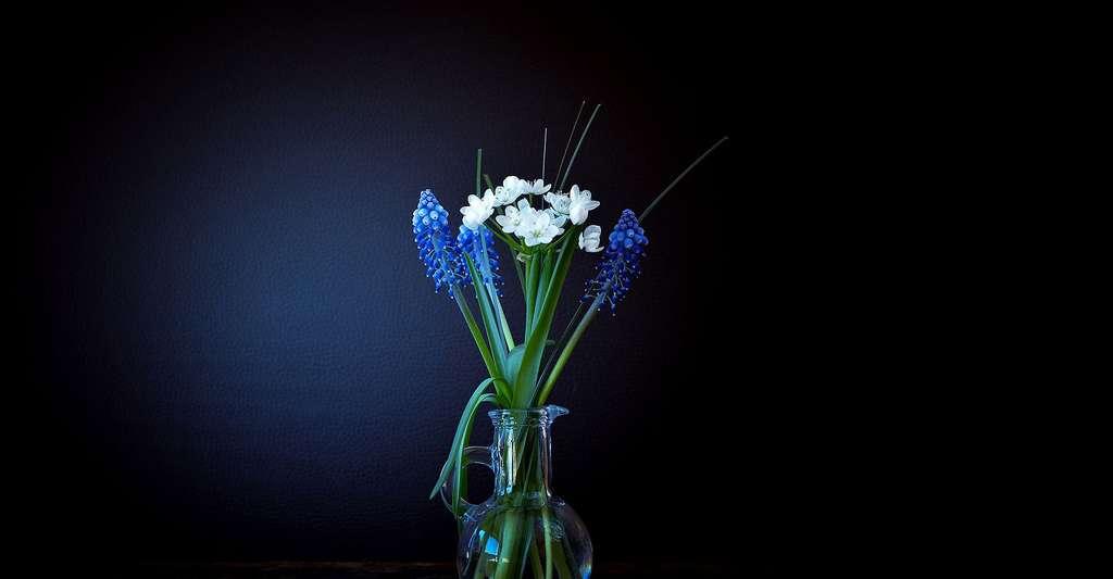 Bouquet de muscaris et narcisses. © Pezibear, Pixabay, DP