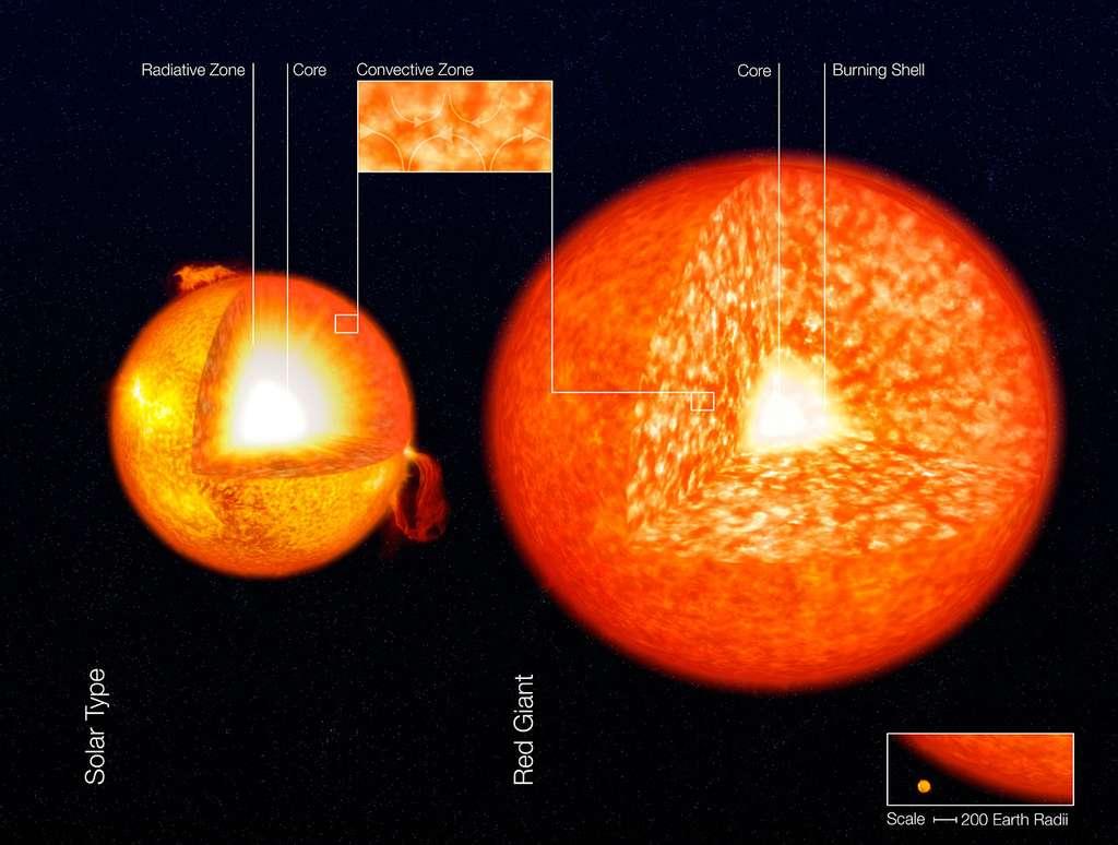 Sur la gauche, on voit la structure interne du Soleil avec son cœur (core en anglais) où l'hydrogène brûle pour donner de l'hélium. L'essentiel du Soleil est dominé par la zone radiative (en jaune), celle où le transfert de chaleur se fait par rayonnement. En surface, on voit la zone convective, où c'est la convection dans un fluide qui assure ce transfert (comme dans l'eau d'une casserole qui bout). Sur la partie droite de ce schéma est représentée une géante rouge beaucoup plus grande que le Soleil (échelle en bas à droite) et dominée par la convection. Elle brûle son hydrogène autour de son cœur en hélium. © ESO