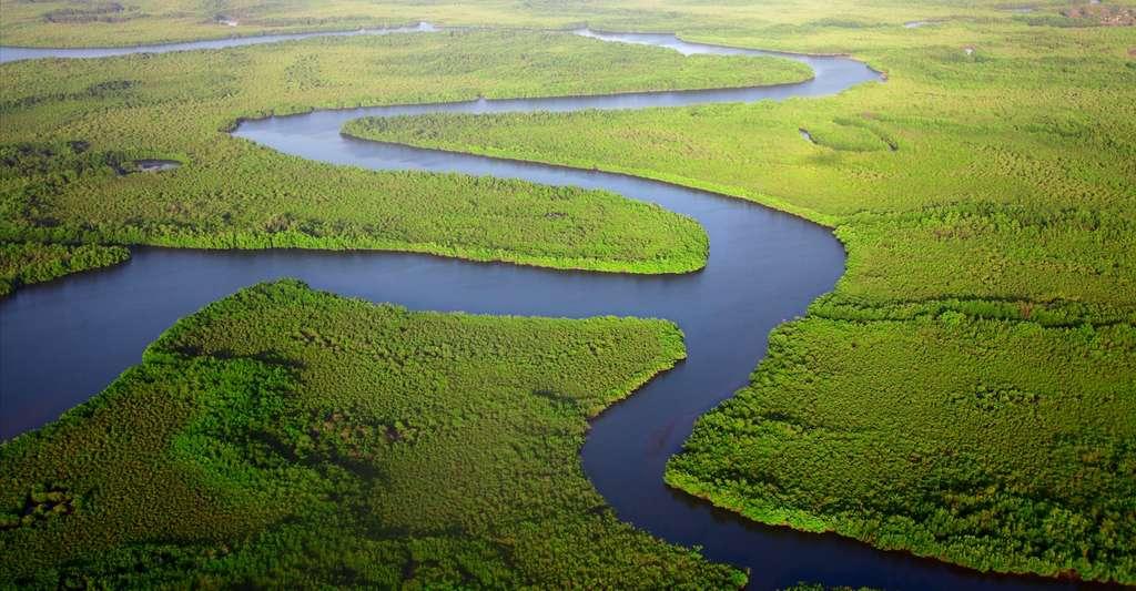 La forêt amazonienne est qualifiée de poumon de la planète. © Dan Roizer, Unsplash