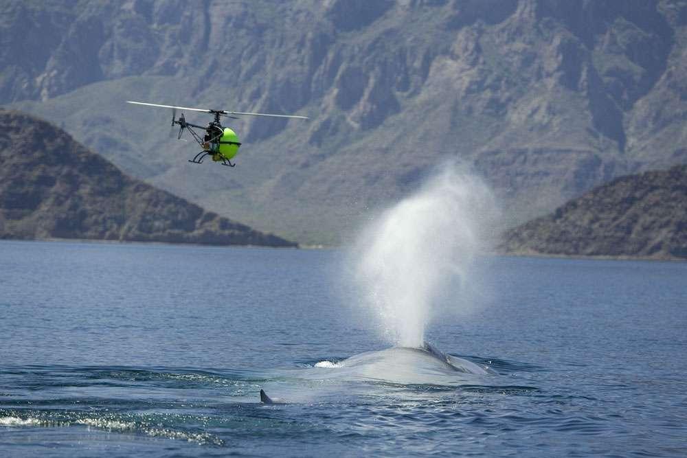Un mini-hélicoptère sur le tournage du film Océans