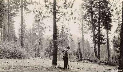 La collecte des plantes a commencé il y a bien longtemps... © Marian Koshland Library, UC Berkeley