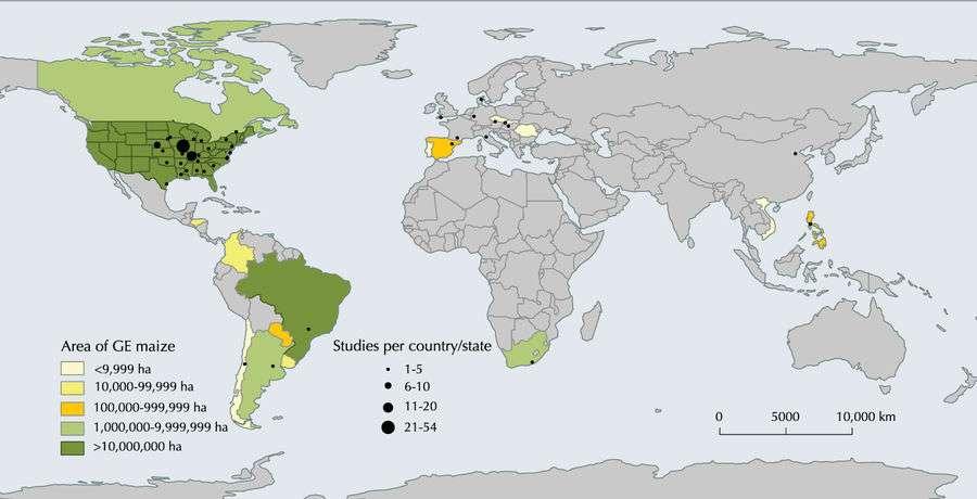 La majorité des observations mobilisées par les chercheurs lors de cette méta-analyse se sont déroulées dans les Amériques, tout particulièrement aux États-Unis. Et pour cause : ce pays est le plus gros cultivateur de maïs OGM au monde. © Elisa Pellegrino et al., Scientific Reports, 2018