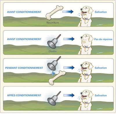 Le chien de Pavlov, crédits DR.