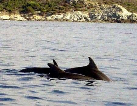 Grands dauphins © WWW.Fr - Tous droits de reproduction interdit