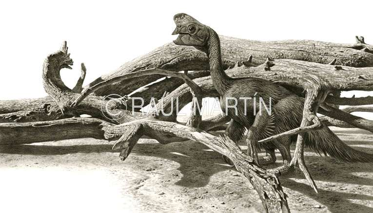 Dessin d'Oviraptor