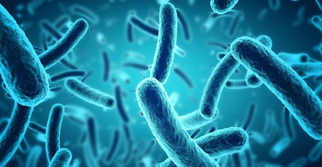 Un monde d'ARN ancestral a-t-il existé ? Ici, des bactéries. © Paulista, DP