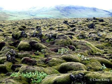 Mousse épaisse actuellement sur la coulée du Laki qui a eu lieu en 1783. © DR