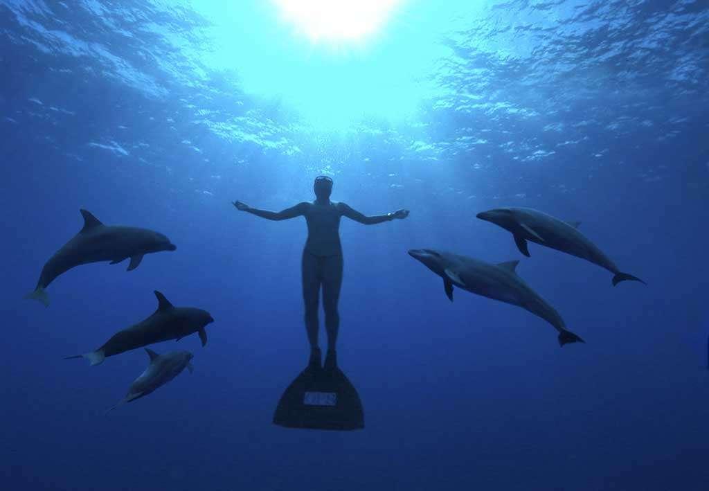 Plongée parmi les dauphins