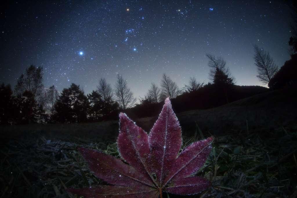Au centre : Orion (et la rougeoyante Bételgeuse), à sa droite, le Taureau et sous les pieds du Chasseur, le Grand Chien et l'étincelante Sirius. © Masahiro Miyasaka