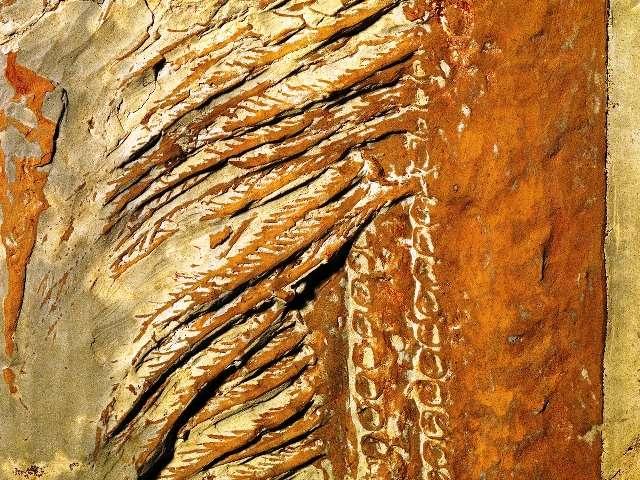 Aegirocassis benmoulae utilisait ses appendices pour filtrer l'eau de mer et trouver sa nourriture. © Peter Van Roy, Yale University