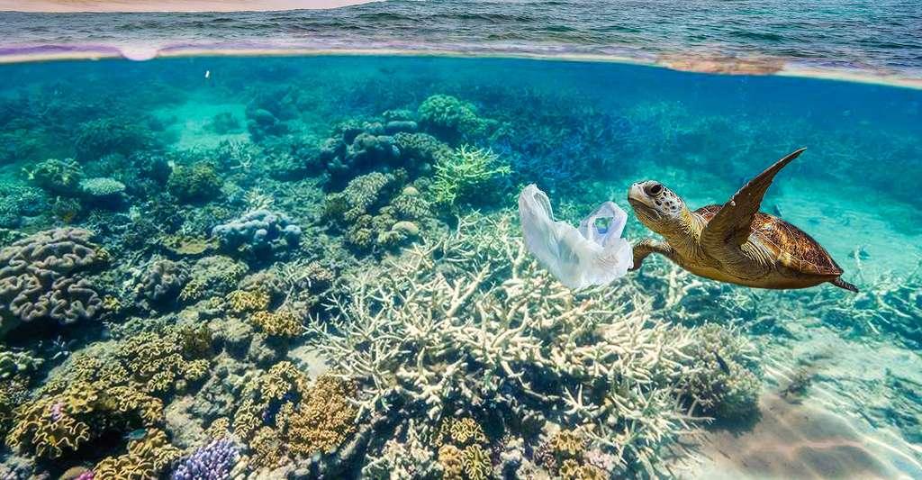 Quel avenir pour le septième continent de plastique ? Parfois, les tortues de mer confondent les sacs plastique avec des méduses. © Aryfahmed, Fotolia