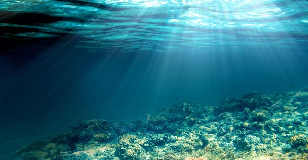 Jusqu'à 200 mètres de profondeur, la température moyenne de l'océan est de l'ordre de 17,5 °C. Puis, elle décroît rapidement pour s'uniformiser entre 0 et 3 °C vers 2.000 mètres de fond. Au final, la température moyenne de l'océan est évaluée à 3,5 °C environ. © vovan, Adobe Stock