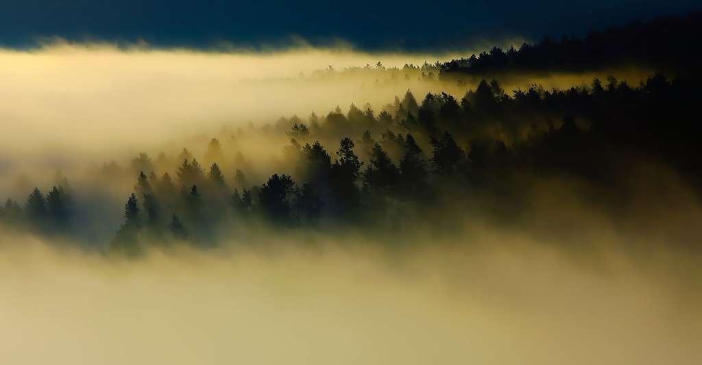 Brouillard sur les forêts des Vosges. © Tpsdave - Domaine public