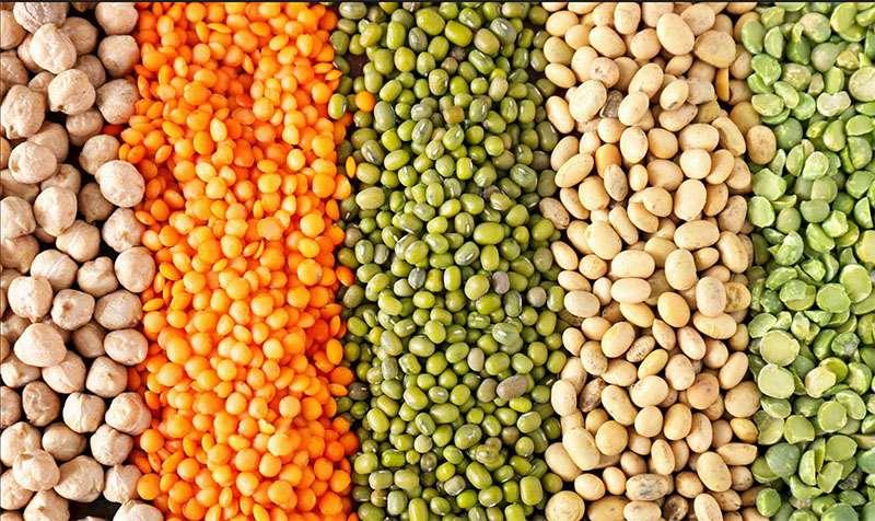 Les légumineuses sont utilisées dans l'alimentation humaine et animale. © Pixel-Shot, Adobe Stock