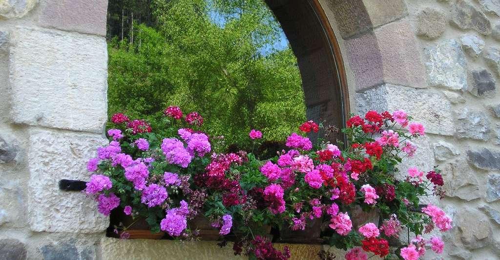 Quelle sera la composition des jardins de demain ? © Fjosecc, DP