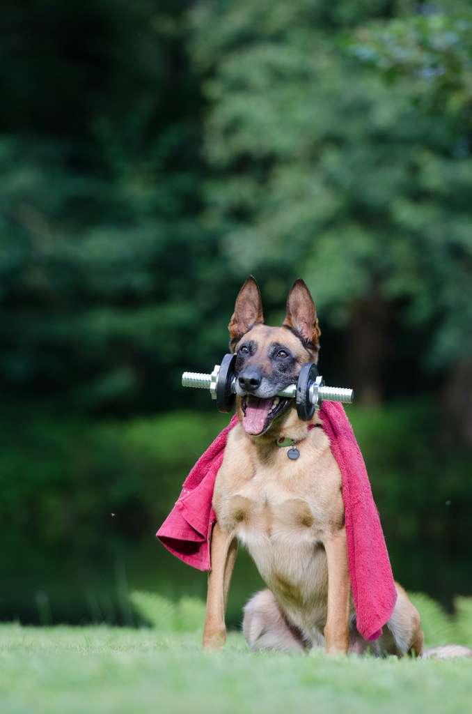 En plus d'être votre fidèle compagnon, votre chien semble vous pousser à être plus actif et engagé physiquement. © Pixabay, Pexels.