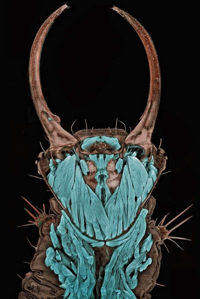 Igor Siwanowicz remporte le concours Nikon Small World 2011 pour cette photographie de chrysope. © Igor SiwanowiczCette année, la première place du concours Small World revient au chercheur Igor Siwanowicz, pour une photo d'une chrysope, insecte appartenant à l'ordre des nevroptères. Chaque année, un jury, composé de photographes, de photomicrographes et de scientifiques, récompense les plus beaux clichés réalisés en microscopie. Il se base sur l'originalité de la photo, son caractère informatif et les qualités techniques et artistiques.James Smith était le lauréat du concours 1977 pour cette photo de cristaux de rutile et de tridymite. Retrouvez la galerie photo au complet en cliquant sur l'image. © James Smith