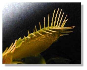 Figure 19. Piège entièrement fermé. © Biologie et Mulitmedia