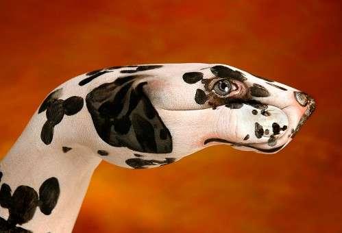 Dalmatien.© Daniel Guido, DR