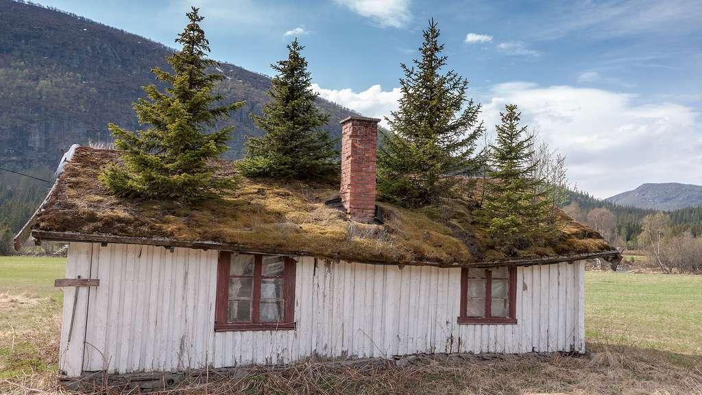 Une maison et des sapins