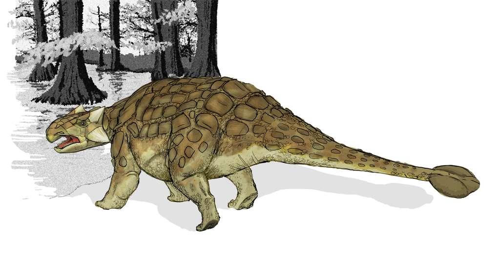 L'Ankylosaure et son incroyable système de défense