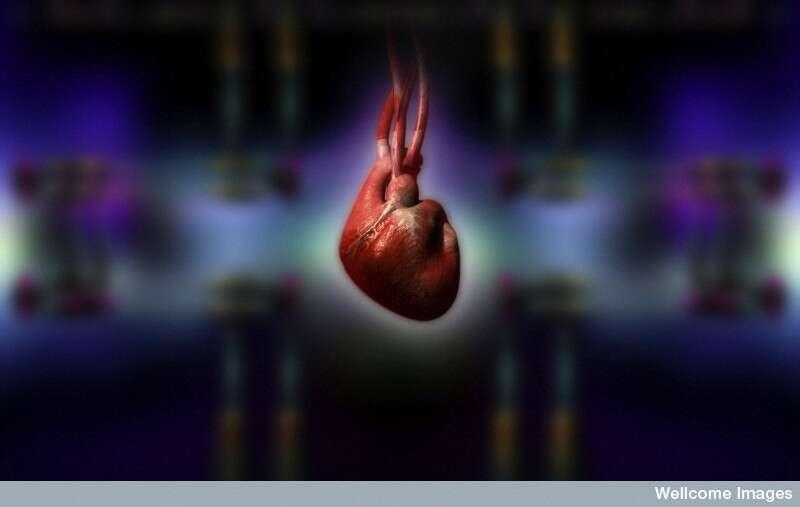 Le cœur et tout le système cardiovasculaire pourraient être sensibles au bruit sourd des avions, ou dérangés par la récurrence des vols, au point d'entraîner une hypertension dangereuse. © Spooky Pooka, Wellcome Images, cc by nc nd 2.0