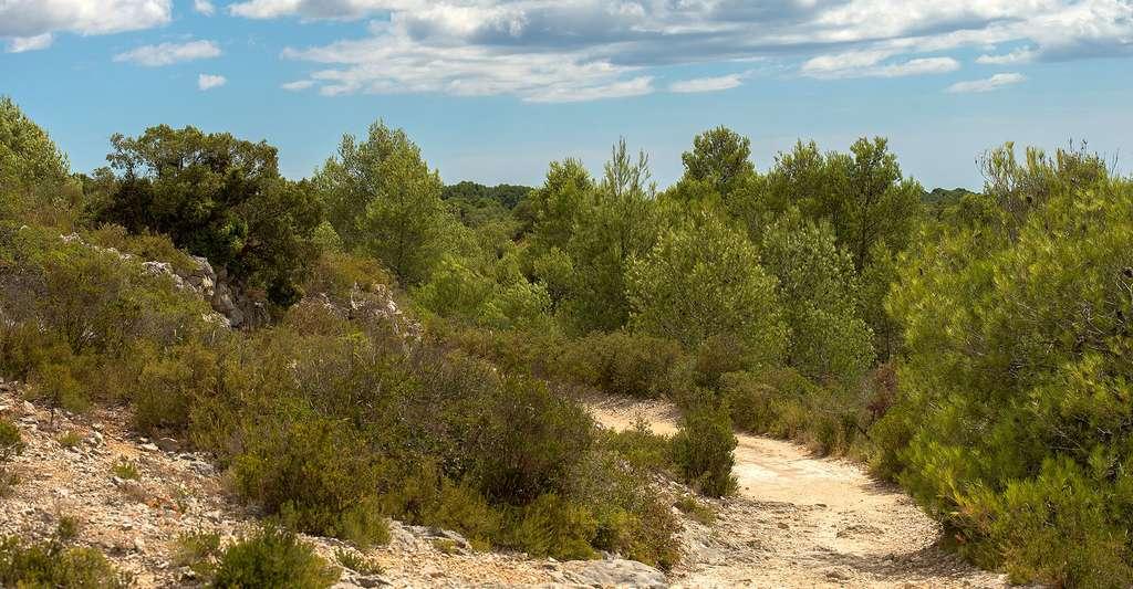 Chemin dans la garrigue. © Christian Ferrer, Wikimedia commons, CC by-sa 3.0