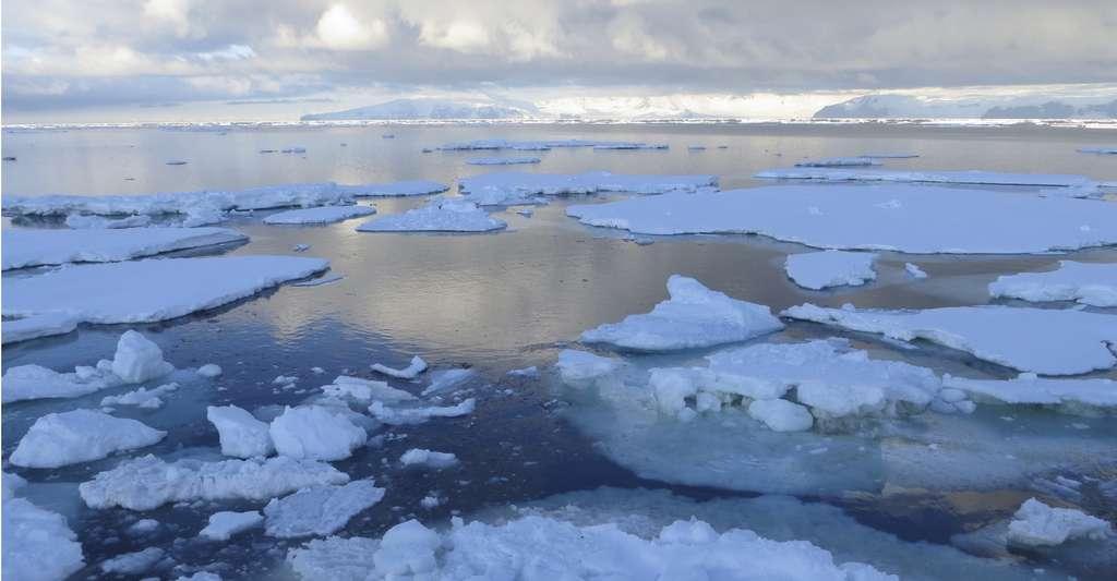 La mer de Ross est partiellement recouverte d'une plateforme de glace (d'eau douce) provenant des glaciers continentaux s'écoulant doucement vers l'océan. Plus loin de la côte, ce couvercle se brise en icebergs. Dans ces eaux froides, les sels minéraux sont nombreux et, en été, le phytoplancton foisonne, ce dont profite toute la chaîne alimentaire. © Dale Lorna Jacobsen, Shutterstock