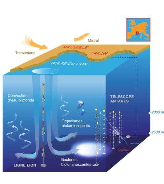 Schéma de l'impact de la formation d'eaux denses sur l'activité de bioluminescence en milieu profond qui est observée à l'aide du télescope Antares. © www.mathildedestelle.com