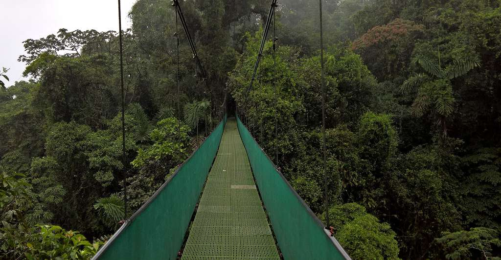 Pont suspendu dans la jungle. © Alanthebox, Wikimedia commons, DP