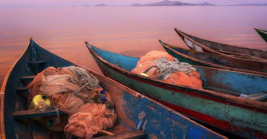 Barques de pêche sur le lac Victoria, au Kenya. © Dietmar Temps, Shutterstock