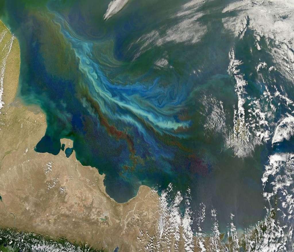 Ensemencer les zones pauvres en fer priverait les autres océans de macronutriments. © Nasa Earth