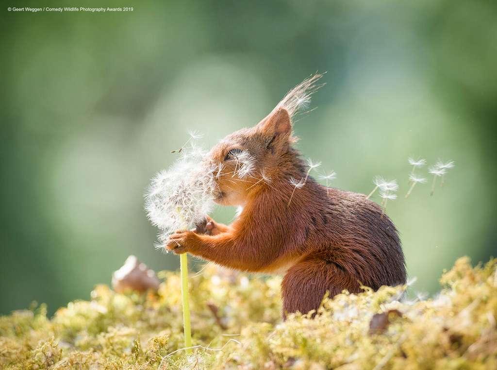 Même les écureuils savent apprécier la douceur d'une fleur. © Geert Weggen, Comedy Wildlife Photography Awards