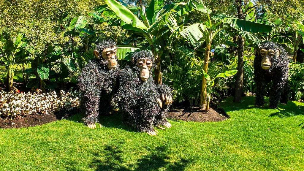 Amusante mosaïculture de chimpanzés