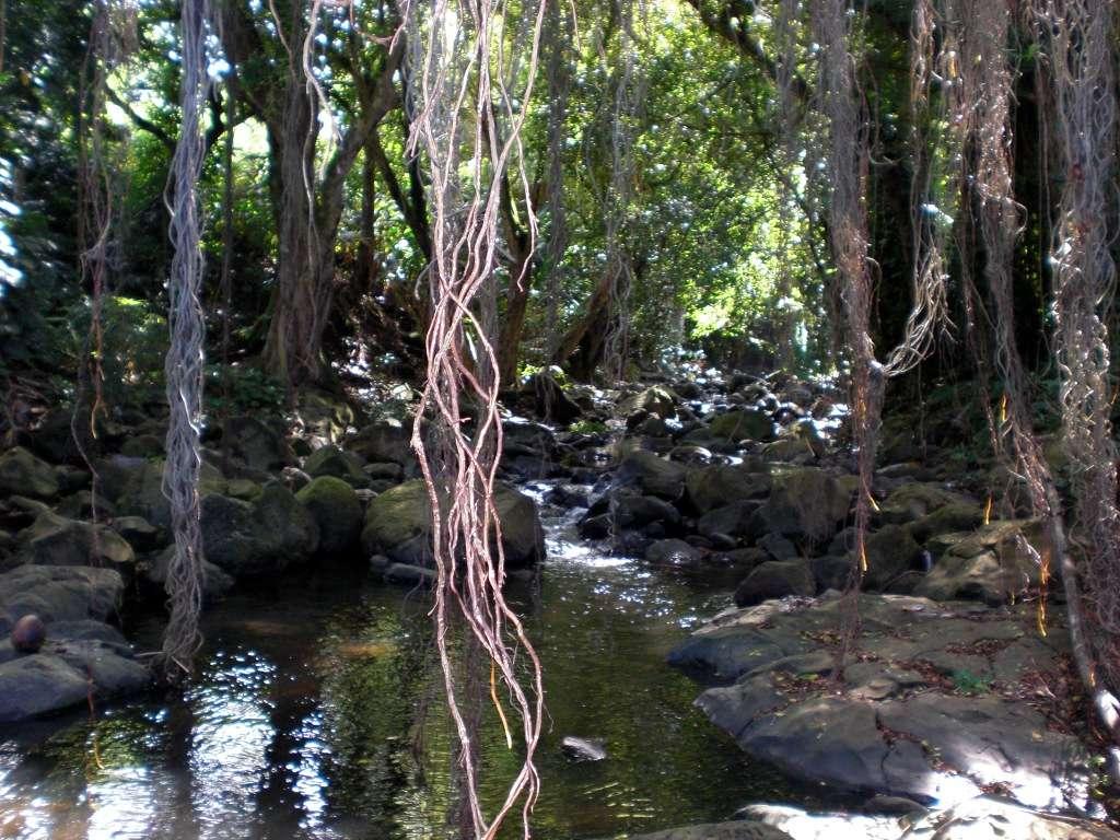 Ce cours d'eau hawaïen transporte des minéraux provenant de roches érodées. Il y en a cependant 3 à 12 fois moins que dans les eaux souterraines. L'île d'Oahu où a été prise cette photographie présente une superficie de 1.545 km². Elle abrite notamment la ville d'Honolulu. © Brigham Young University