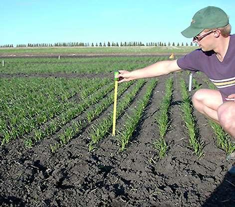 Mesures dans champ de blé - Amérique du nord