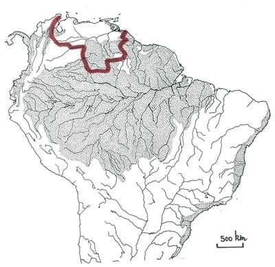 En Amérique du Sud tropicale on reconnaît quatre massifs forestiers, dont le plus grand est celui du bloc amazonien. La courbe rouge délimite la « Région des Guyanes », une région caractérisée par certains peuplements végétaux et animaux. La Guyane française s'inscrit dans cette province biogéographique. © Francois Catzeflis
