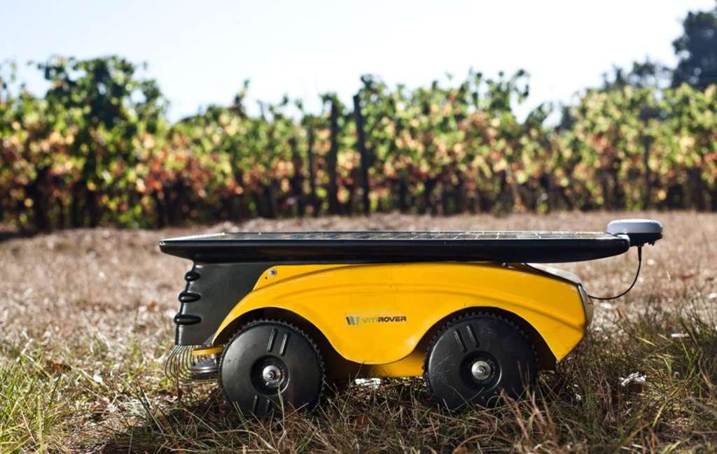 Le Vitirover, un robot désherbeur, autonome. Il tond tout ce qui pousse autour des ceps, jusqu'à 2 cm du pied de vigne et sans sortir de la parcelle dont les contours sont définis par un positionnement au GPS. © Vitirover